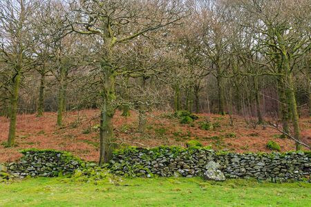 A stone wall in the lake district in front of woodland Standard-Bild - 134137497