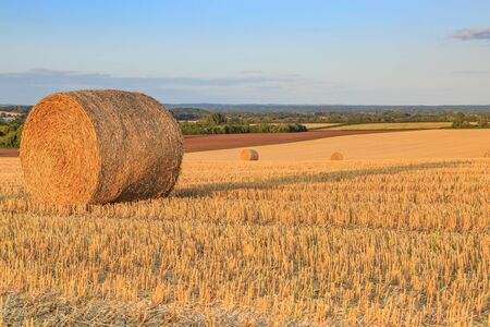 A photograph of hay bales in the Sussex countryside, taken with evening light