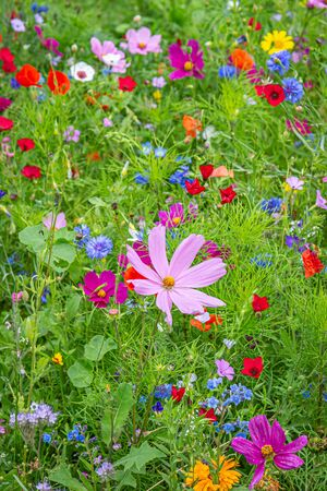 Colourful flowers growing in a summer garden 免版税图像