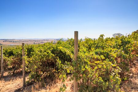 A scenic view of a South African vineyard with a vast landscape behind.