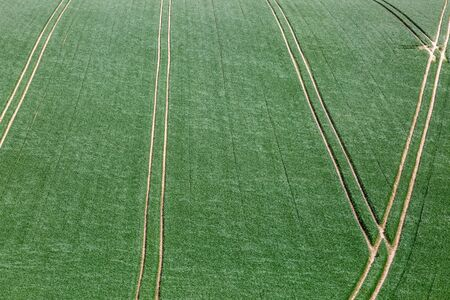 A full frame photograph of a green fields with tractor lines