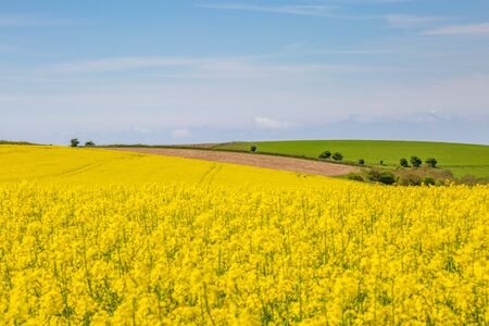 A South Downs landscape in spring, with a canola/rapeseed field in the foreground Stock Photo