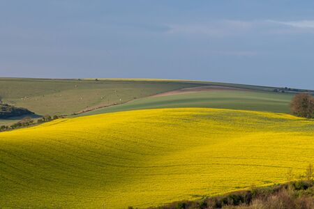 A scenic view over a South Downs landscape in spring, with canolarapeseed crops growing in the sunshine
