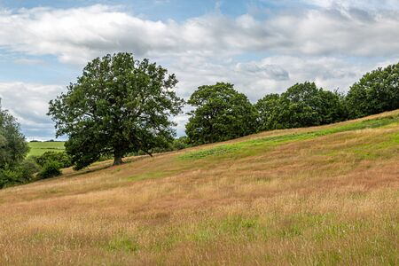Trees in a field in Sussex on a summers day