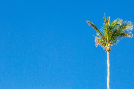A palm tree against a clear blue sky on the island of Bermuda