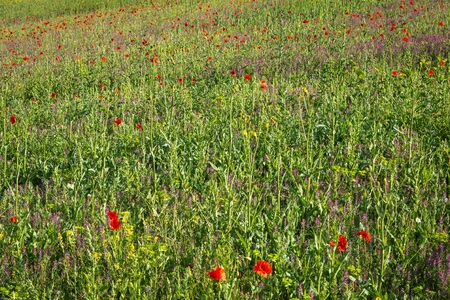 A full frame photograph of wildflowers in a field