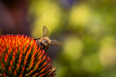 A close up of a bee perched on a flower, with a shallow depth of field