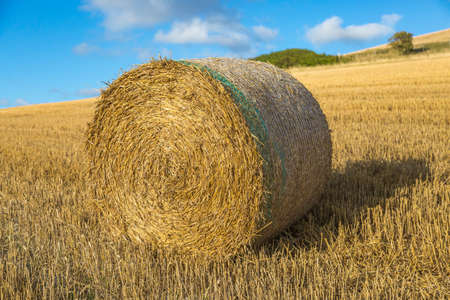 A hay bale in the Sussex countryside on a sunny summers evening Imagens