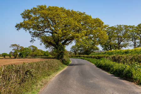 A road in the Isle of Wight countryside on a sunny spring day