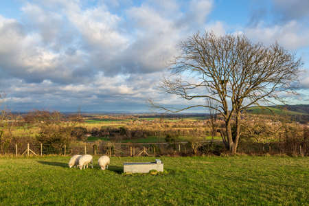Sheep grazing on a hillside in the South Downs, on a sunny winters day Фото со стока