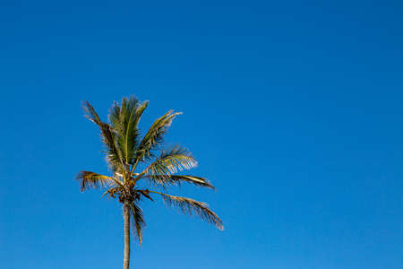 A Palm Tree against a Clear Blue Sky Banco de Imagens