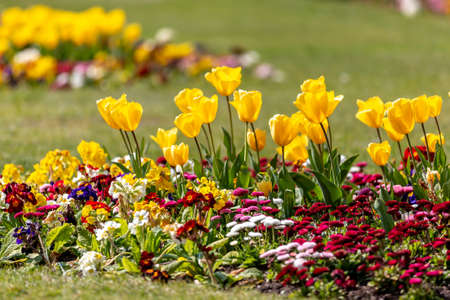 Vibrant spring flowers in the sunshine, with a shallow depth of field Imagens