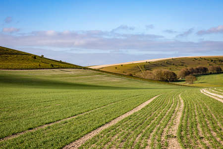 Crops growing in the South Downs in Sussex, on a sunny spring morning Imagens