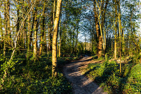 A Pathway Through Woodland on a Sunny Spring Evening