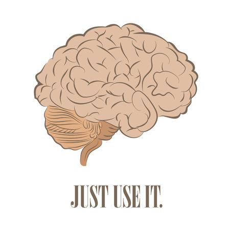 cerebro: Parte frontal del cerebro en blanco. Sólo usarlo