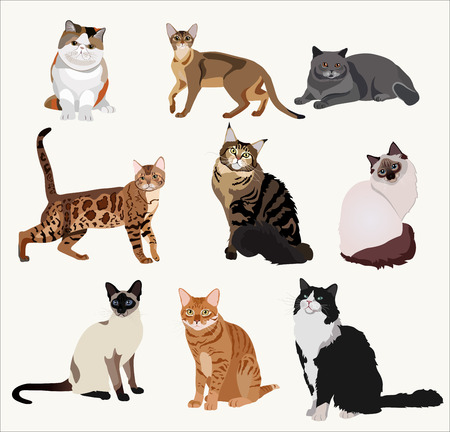 breed: Vector Breed cats. Cartoon highly detailed pets. Illustration