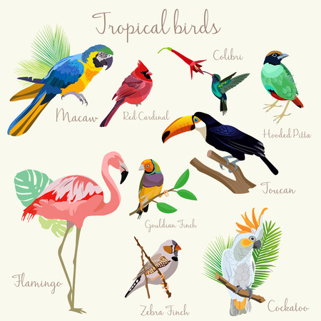 Bright color Exotic tropical birds set. Macaw, red cardinal, hooded pitta, colibri, toucan, flamingo, cockatoo, gouldian zebra finch. Vectores