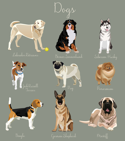jack russel: Different type of dogs set isolated. Big and small animals.