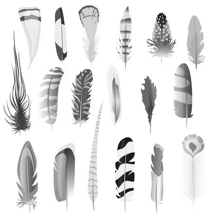 Het verzamelen van gedetailleerde zwart-wit stijl vogelveren te stellen. Decoratie-elementen. vector illustratie Vector Illustratie