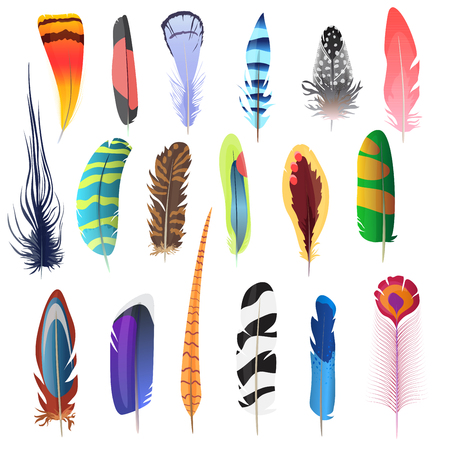 Collection of detailed color bird feathers set. Decoration elements. Vector illustration Vettoriali