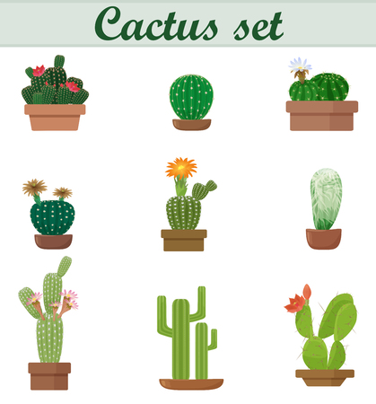 flores exoticas: ilustraci�n vectorial realista del conjunto de Cactus. estilo elegante plana. Ex�tica flor de la planta de flores. pote hermosa