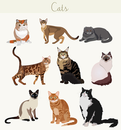breed: Vector Breed cats in different poses. Cartoon highly detailed pets