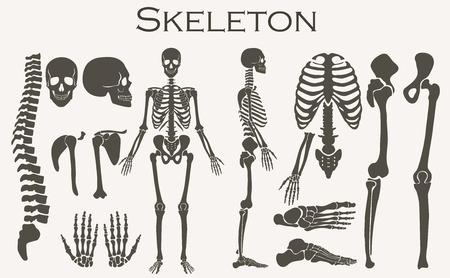 Human bones skeleton silhouette  collection set. High detailed Vector illustration Illustration