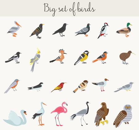 ilustración iconos de los pájaros. Los pájaros coloridos dibujos animados iconos conjunto Ilustración de vector
