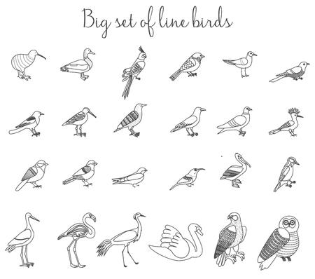 ornithological: Birds outline thin line illustration icons. Colorful cartoon birds icons set Illustration