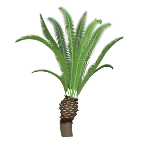 tree isolated: Exotic tropical high detailed palm tree isolated Illustration