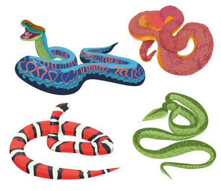 snake bite: Vector colorful tropical exotic snakes isolated set collection