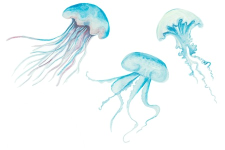 Watercolor painting jellyfish. Medusa marine life Illustration