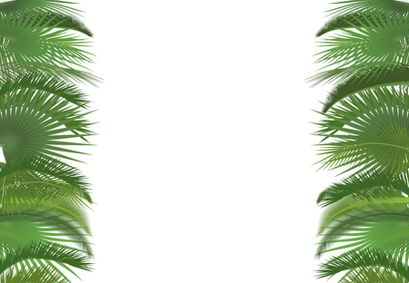 selebration: Palm plant tree leaves background template. Exotic tropical festival selebration greeting card Illustration