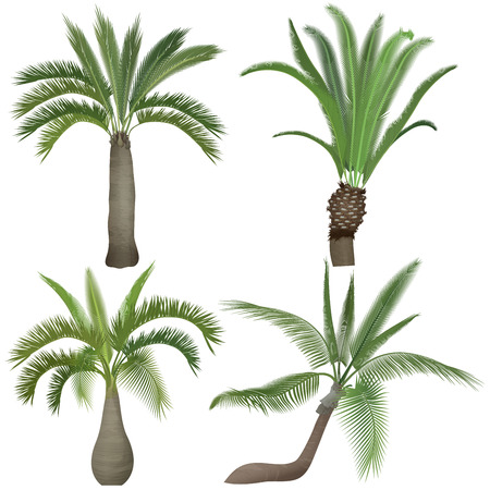 natural arch: Exotic tropical realistic palm tree collection set.