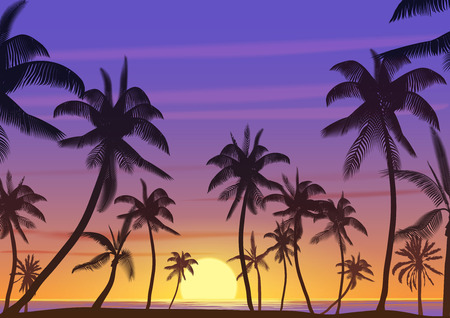 Palm coconut trees Silhouette at sunset or sunrise. Realistic vector illustration. Earth paradise on the beach