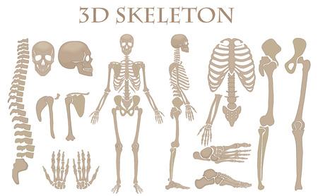 Menselijke botten 3d realistische vector skelet silhouet collectie set. Hoog gedetailleerde helloween illustratie
