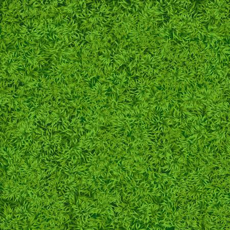 soccer grass: Natural realistic green grass texture background. Soccer grass top template Stock Photo