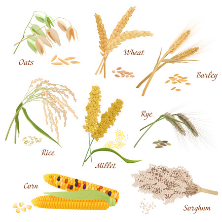 Cereal Plants vector icons illustrations. Oats wheat barley rye millet rice sorghum corn set