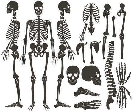 Human bones skeleton dark black silhouette collection. High detailed Vector Set of bones illustration Vectores