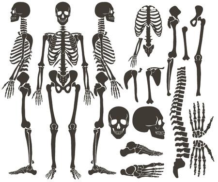 Human bones skeleton dark black silhouette collection. High detailed Vector Set of bones illustration Vettoriali
