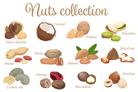 brazil nut: Vector collection mix of different types nuts Illustration