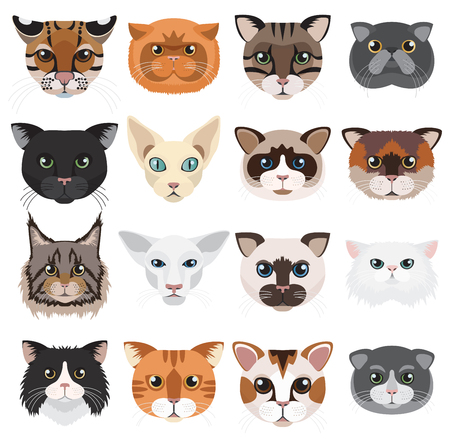 Cats heads icons emoticons vector set.