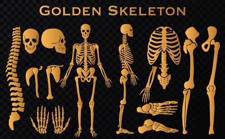 Golden luxury human bones skeleton silhouette collection set. High detailed Vector illustration.