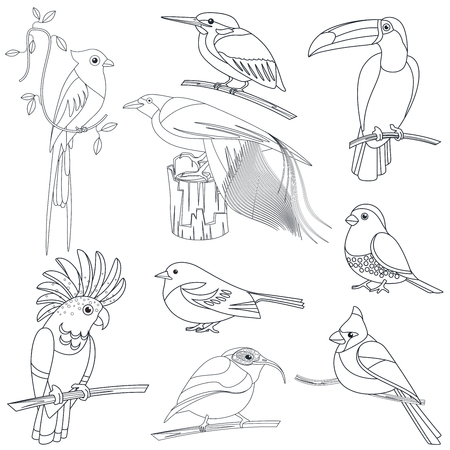 Set of vector outline line stroke tropical exotic birds.