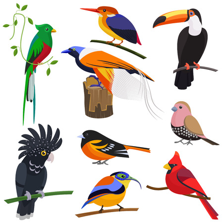 Set of vector flat cartoon tropical exotic birds set. Vettoriali