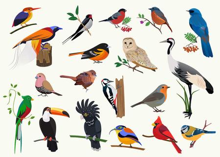 Różne ptaki z kreskówek ustawione dla każdego projektu wizualnego