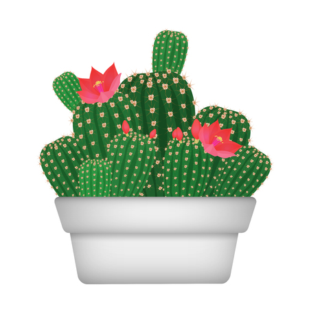 Isolated cartoon decorative home plant cactus in pot vectror illustration Vector Illustration