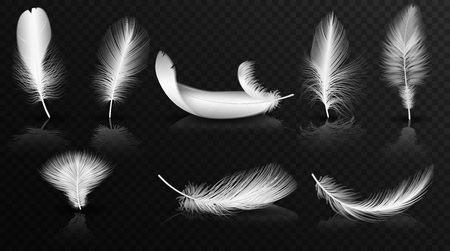 Vector white feathers on the glossy transperant alpha background collection. Realistic volumetric fluffy twirled feathers set.