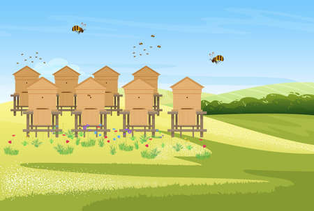 Beekeeping apiary on flower meadow field village landscape, honey production vector illustration. Cartoon bees insects flying over wooden beehives, producing organic honey farm product background