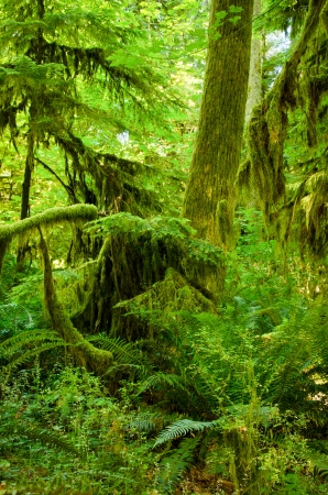 temperate: The lush undergrowth of plants in a rainforest